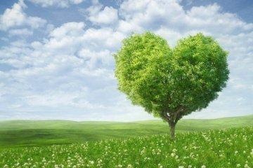 2020精选植树节主题班会教案3篇