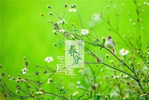 2020春分如何养生_春分节养生方法