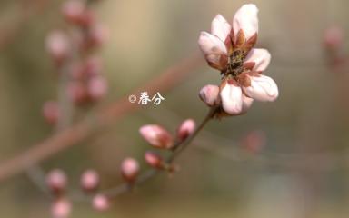 春分诗词大全2020_描写春分节气的古诗文5篇