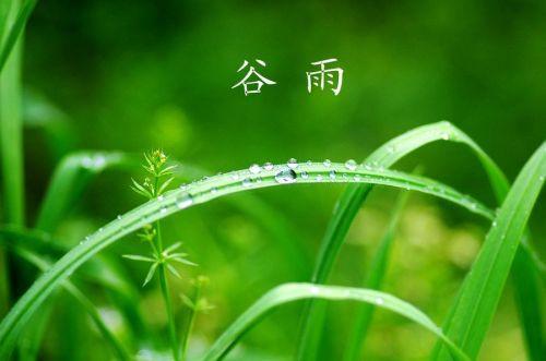 关于谷雨的诗_谷雨古诗词精选5首