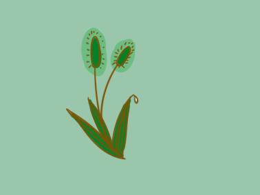 翠绿的狗尾草简笔画要怎么画