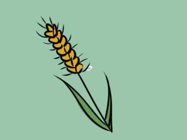 金黄色的麦穗简笔画要怎么画
