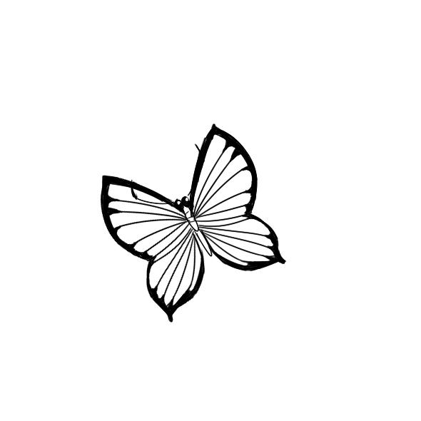 漂亮的小蝴蝶简笔画怎么画